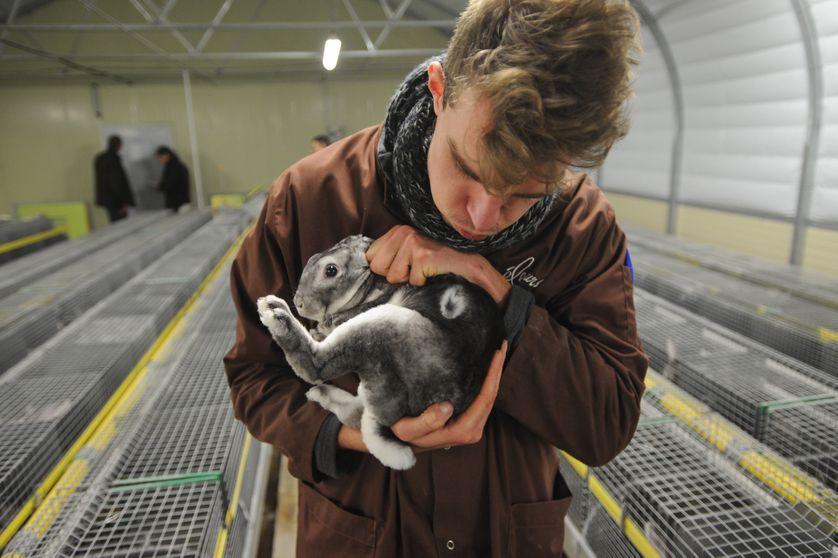 L' association L214 a récemment dénoncé les conditions des lapins d'élevage.