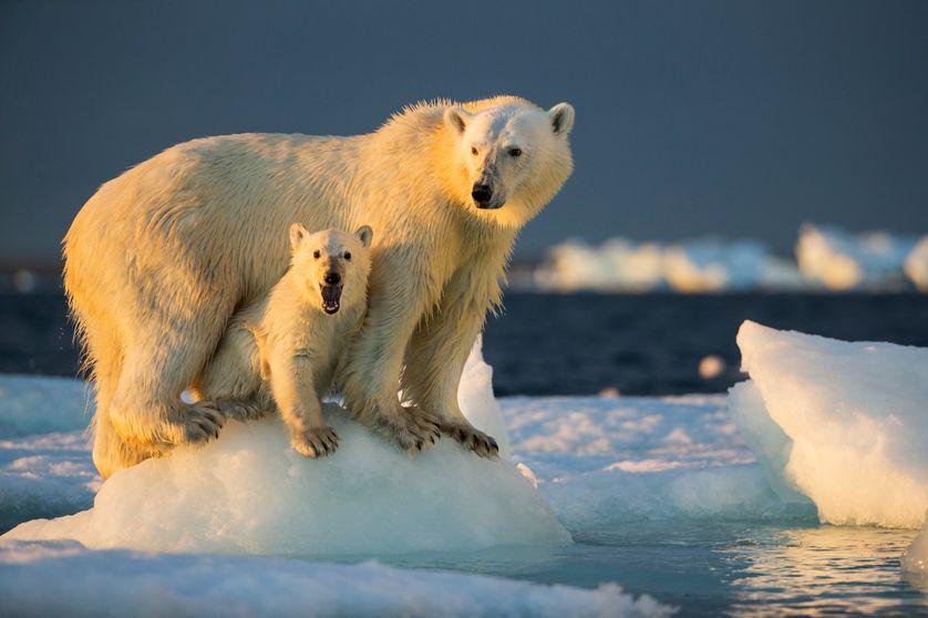 Un ours polaire sous sa mère sur un bloc de glace près de Harbour Islands (Territoire du Nunavut au Canada)