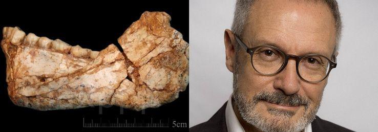 La mandibule Irhoud 11 trouvée lors des fouilles du site, Jebel Irhoud / Jean-Jacques Hublin• Crédits : UPI/MAXPPP/WikiCommons - Maxppp