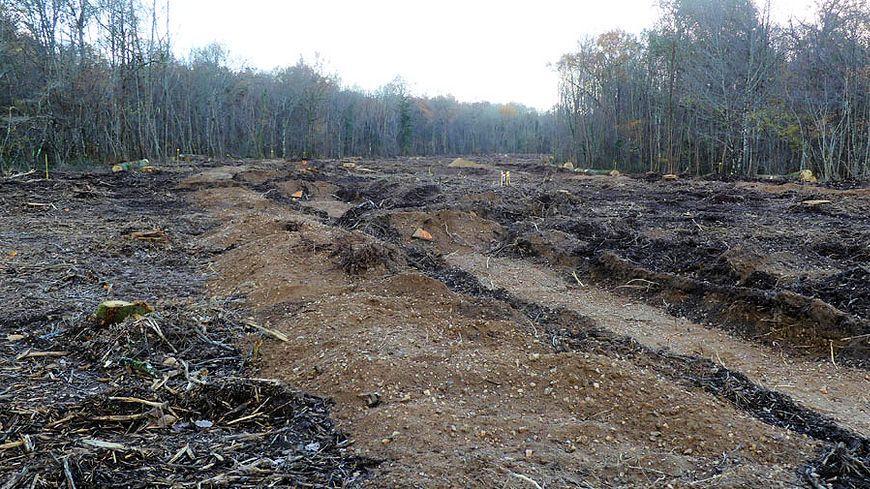 Premiers travaux préparatoires et premiers arbres abattus pour ce projet à St Denis-de-l'Hôtel