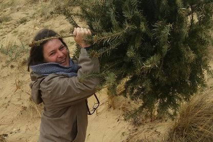 Fanfan à l'Ile de Ré qui plante un sapin pour sauver les dunes