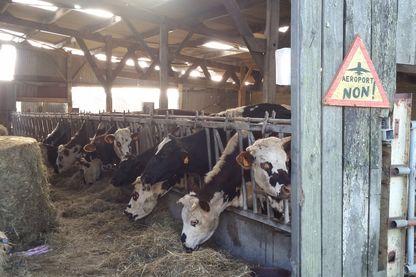 Les occupants de la ZAD ont mené à bien plusieurs projets d'élevage et de maraîchage.