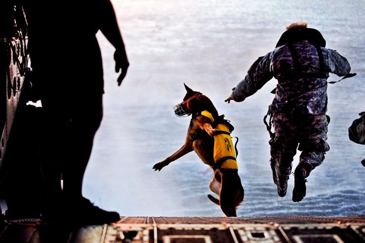 Un chien militaire et son maître, soldat des forces spéciales américaines, en exercice de saut en parachute en 2011.