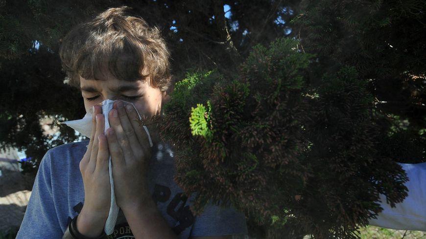 La période des allergies aux pollens de cyprès a démarré dans le Gard