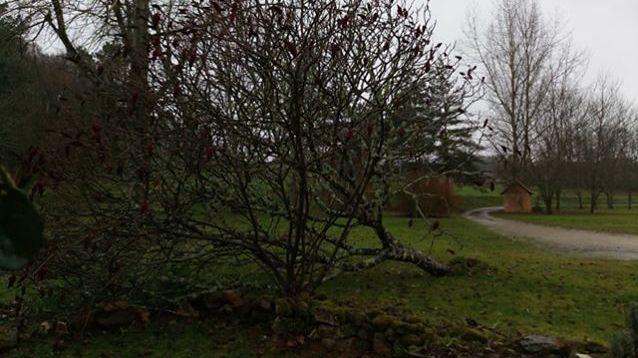 Plusieurs arbres sont tombés au sol en Dordogne à cause de la tempête Carmen.