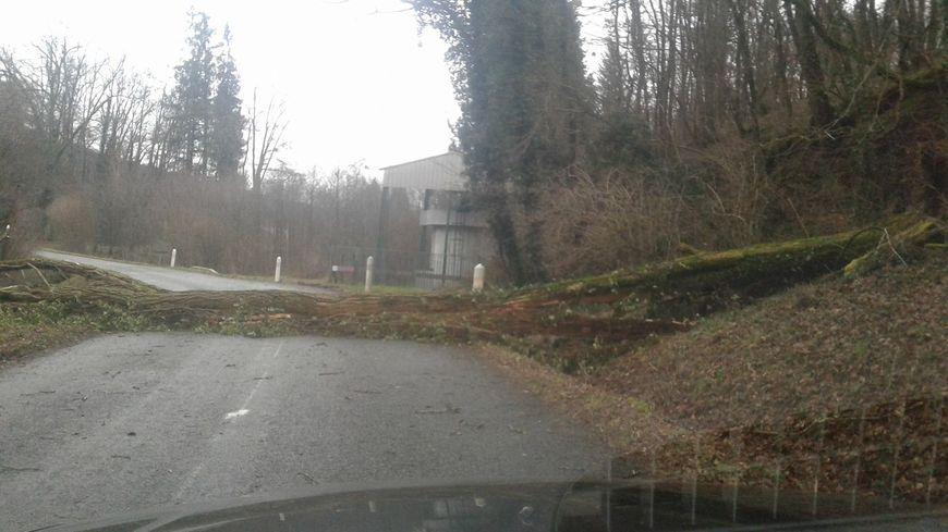 Arbre sur la route en Franche-Comté .