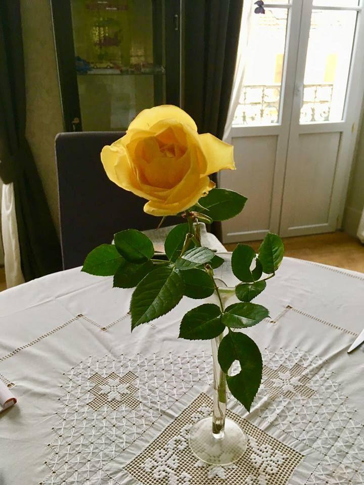 Joli rose cueillie à Périgueux
