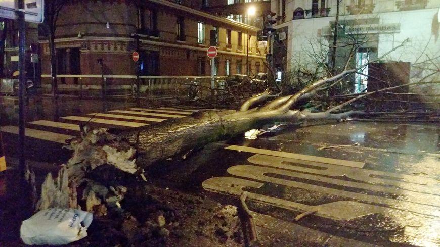 arbre tombé dans le 15 e arrondissement de Paris