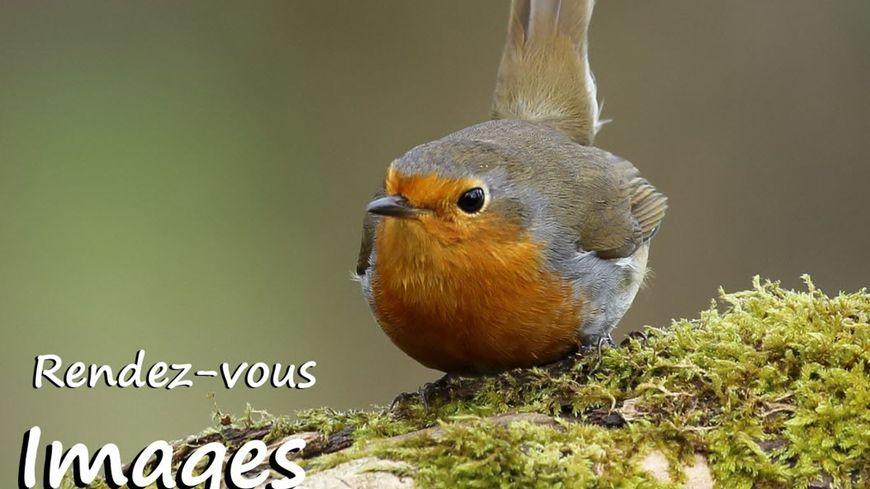 """C'est ce week-end à Longecourt-en-Plaine avec l'association """"Images Plaine Nature"""""""