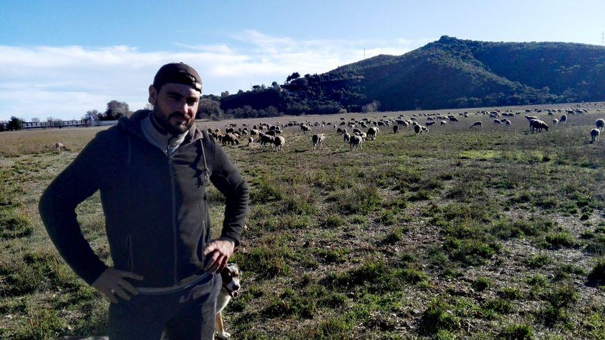 Le troupeau de Thomas Charrier victime d'une attaque de loups
