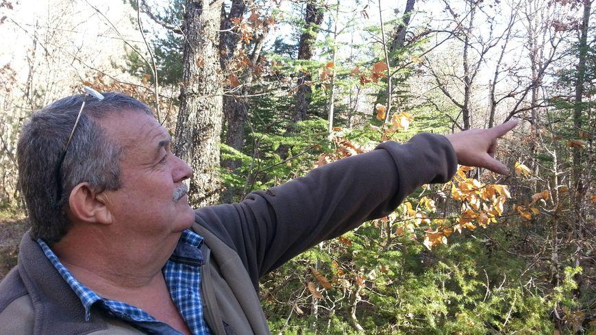 Michel Jourdan laissera grandir cèdres et pins pour stocker du carbone sur le plateau d'Albion