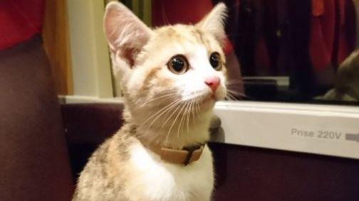 Noisette, le chaton retrouvé dans le train