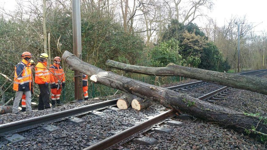 Des arbres sont tombés sur la voie à Saint-Cloud, interrompant le trafic sur la ligne L du Transilien