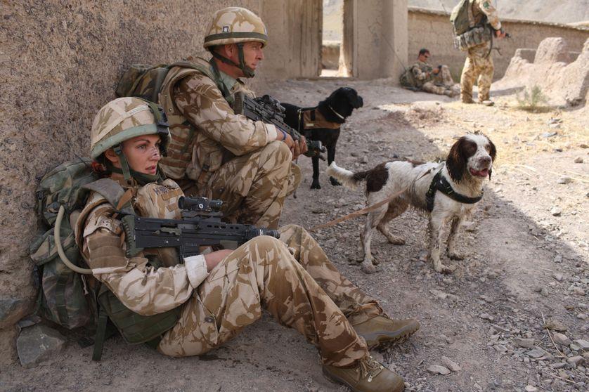 Patrouille de l'armée britannique et ses chiens, Treo et Leanna, en Afghanistan, en 2008