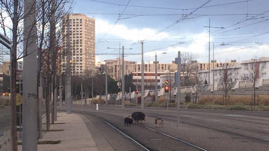 Lassés d'attendre le tram qui n'arrive pas, elles décident de partir à pied
