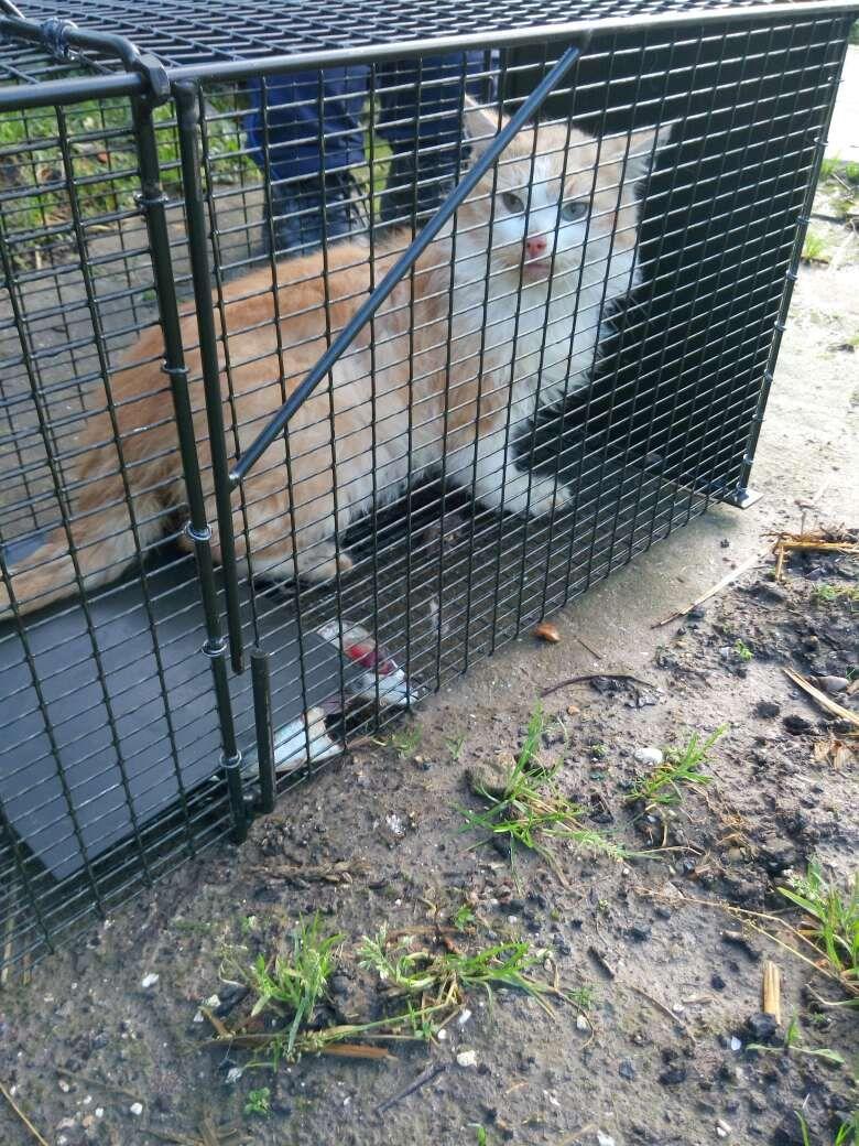 Un chat capturé par la police municipale à Abbeville