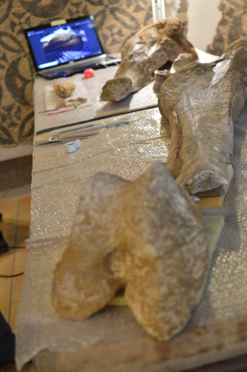 Ce mammouth devait mesurer plus de trois mètres de haut.