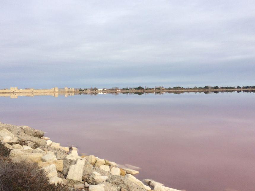 La couleur rose des marais n'est plus dominante mais toujours visible