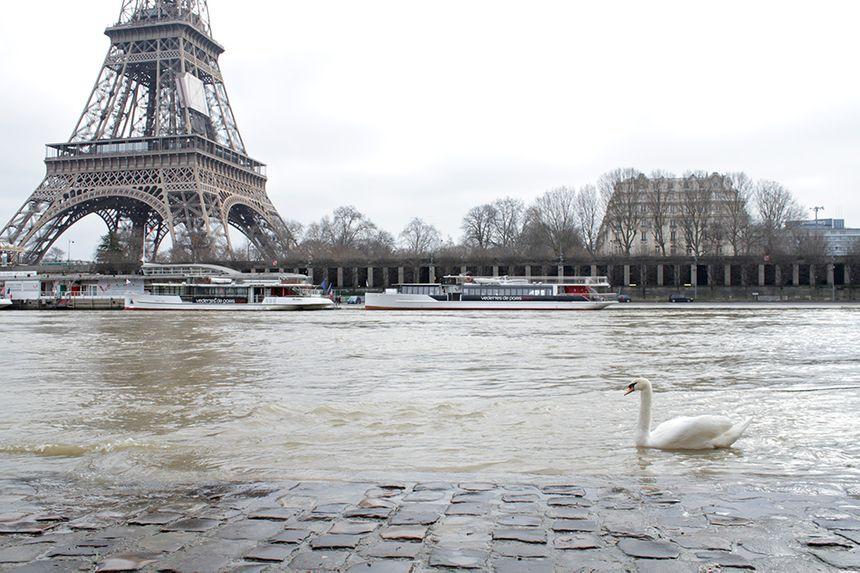 Bord de Seine.