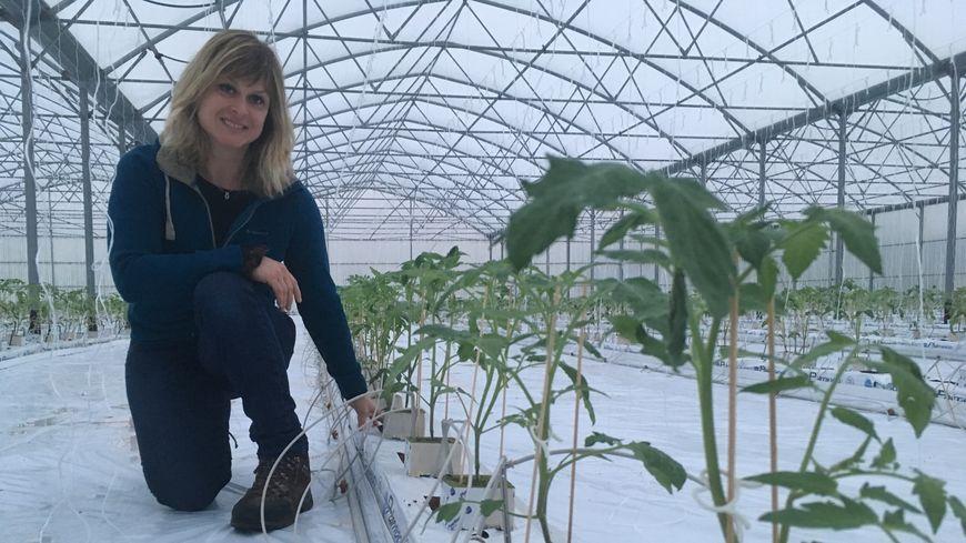 Estelle  à côté de 3500 plants de tomates