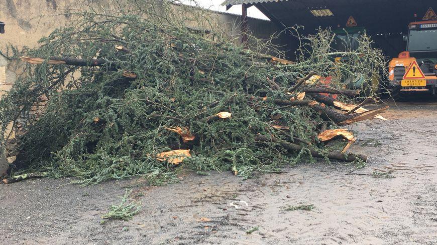 Branchages d'arbres arrachés par la tempête