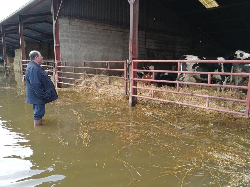 Malgré tous ses efforts les vaches ont les pattes dans l'eau