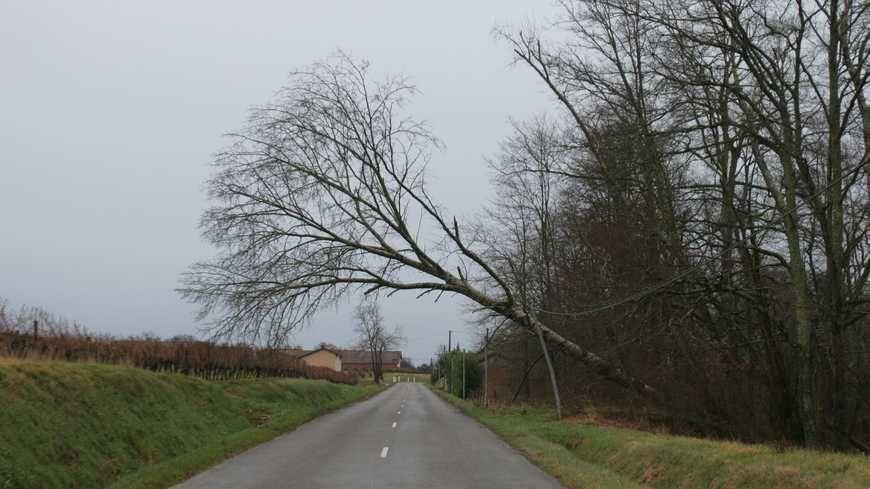 Un arbre tombé sur des fils électriques. (Archives)