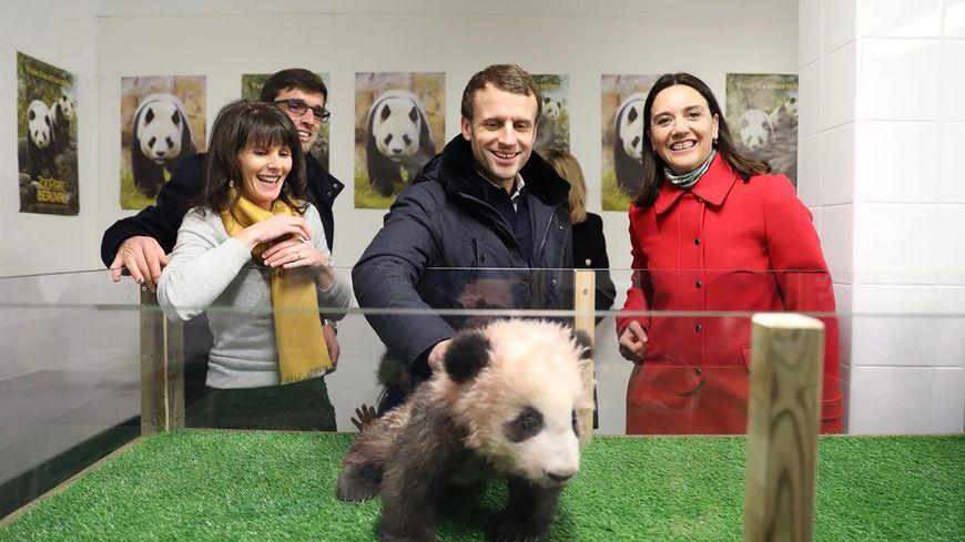 Le président Emmanuel Macron auprès du bébé panda du Zoo de Beauval le 16 décembre 2017