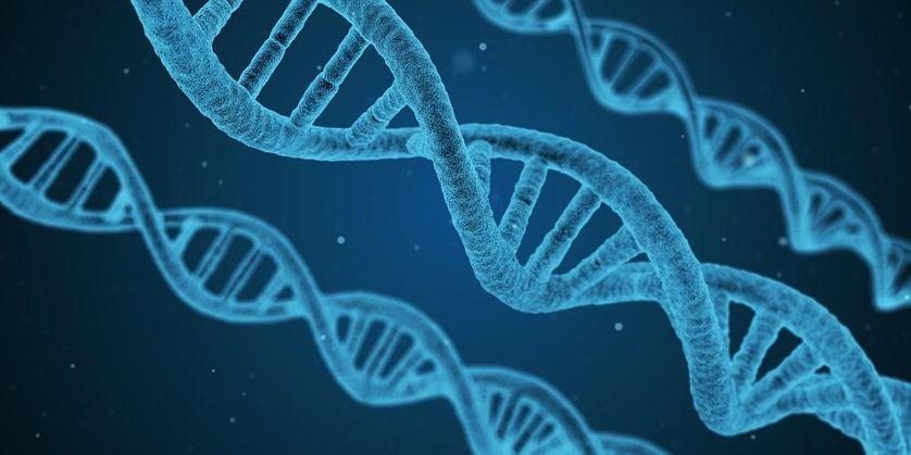 ADN de synthèse, deux nouveaux maillons dans la chaîne
