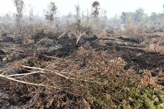 Pour fabriquer l'huile de palme, on sacrifie des forêts et leurs habitants.