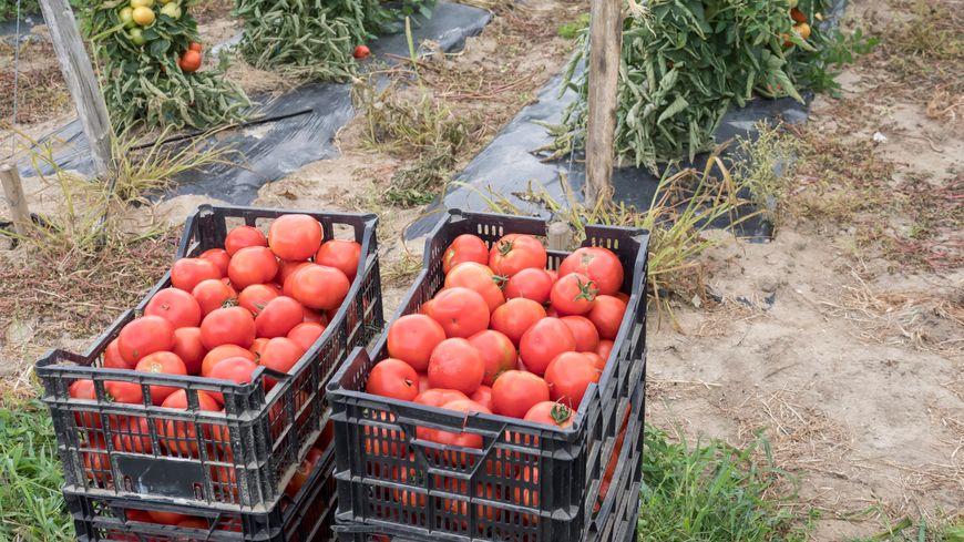 Le jardin de l'étang des Forges devrait accueillir une quarantaine de légumes différents (photo d'illustration)