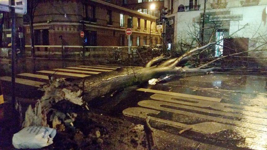Un arbre tombé dans le 15e arrondissement de Paris