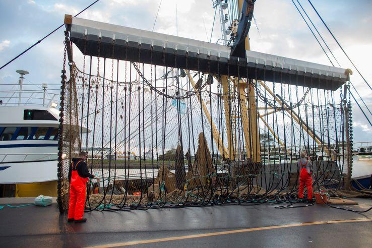 Le port de Den Helder, aux Pays-Bas, est le berceau de la pêche électrique.