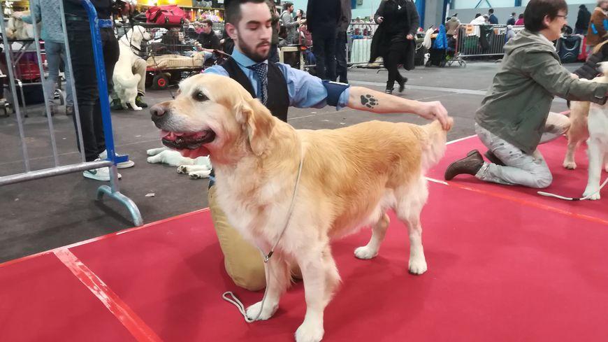 PHOTOS - Les plus beaux chiens de France ont rendez-vous à