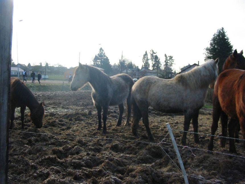 Les treize chevaux étaient gardés dans un enclos de 5000 m2