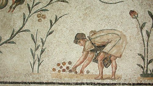 Technique et économie de l'huile d'olive dans la Méditerranée antique (1/10) : De l'olivier sauvage à l'olivier domestique, une histoire naturelle
