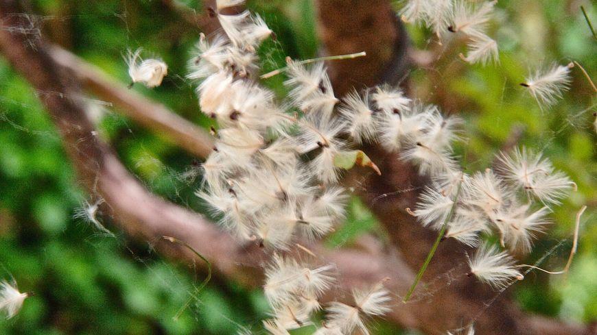 Le pollinarium de Creuse va donner ses premiers résultats cette saison (illustration)