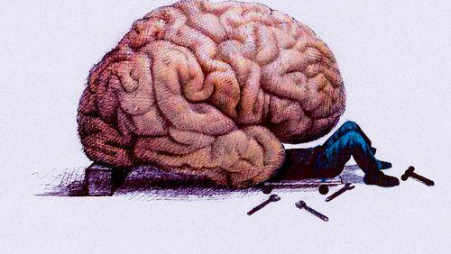 Le cerveau est vivant