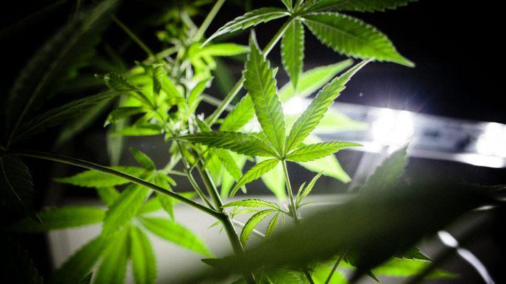 Peut-on dire que le cannabis a des effets thérapeutiques ?