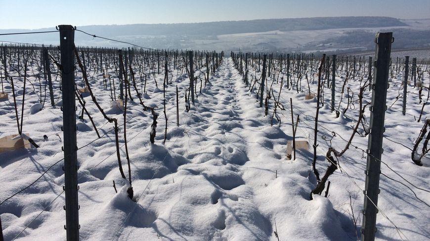 Le travail dans les vignes se poursuit pendant l hiver en Champagne b9199bdba4a