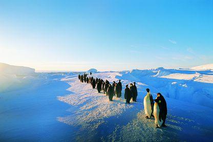 Travailler en antarctique dans des paysages remarquables