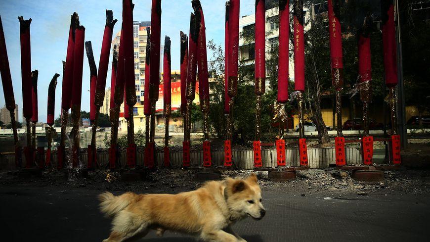 Nouvel an chinois - année du chien (illustration)