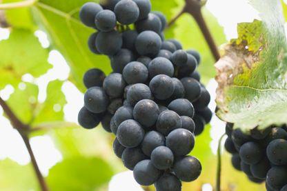 Le vin est-il un alcool comme les autres?