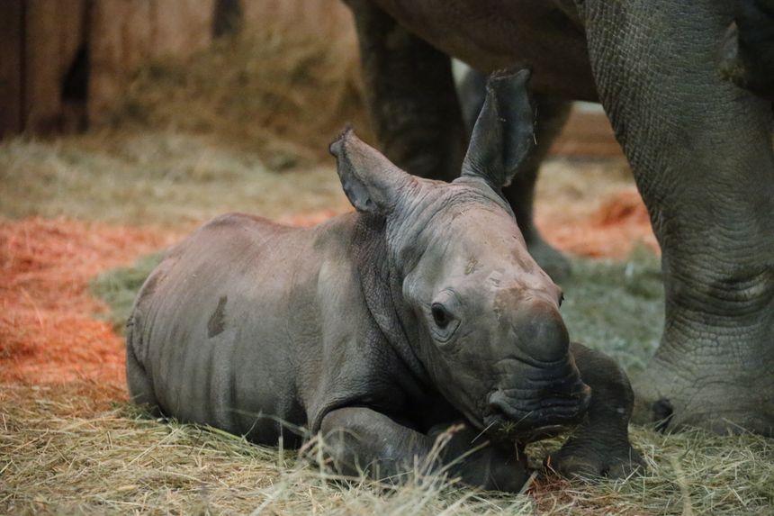 Aranka, un bébé qui pèse déjà 85 kg au bout de 3 semaines.