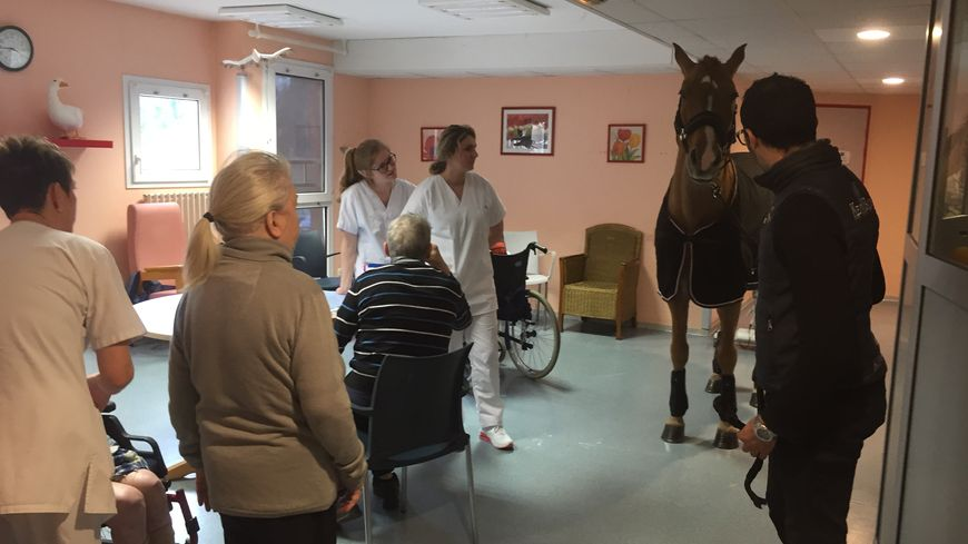 Hassen Bouchakour et son cheval Peyo sont libres de déambuler dans les couloirs de l'Ehpad pour aller à la rencontre des patients.