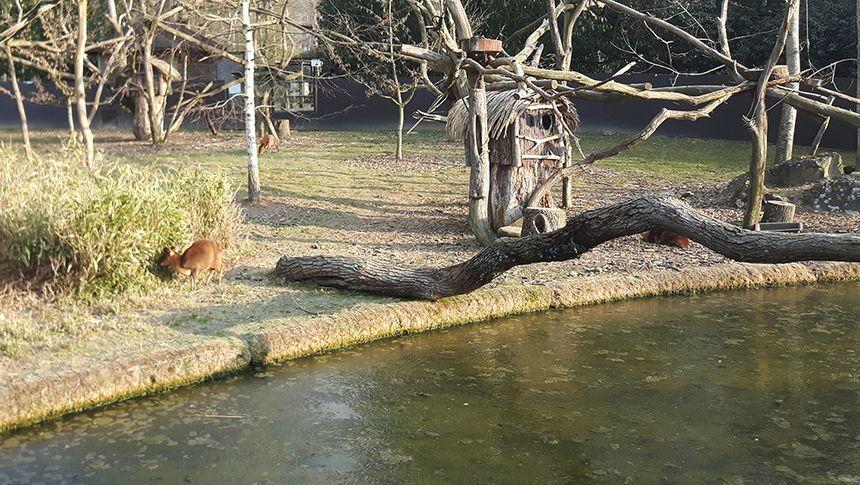 Le lac gelé du zoo.