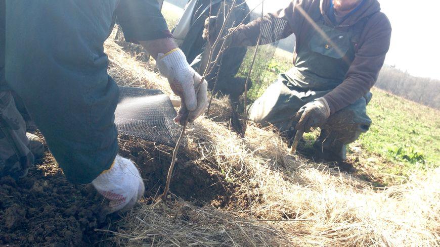 Atelier plantage de haies pour reboiser les anciens bocages du berry