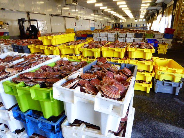 Septième port de pêche de France, Port-en-Bessin possède l'une  des criées les plus modernes de France qui vend chaque année 11000 tonnes de poisson, dont 42% destinés à l'exportation