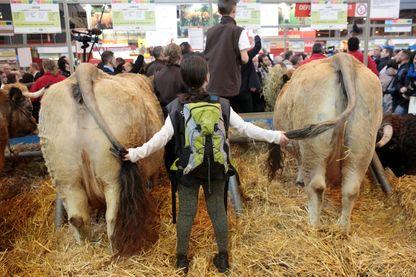 Une jeune fille au milieu des vaches, Salon de l'agriculture de Paris - Février 2017
