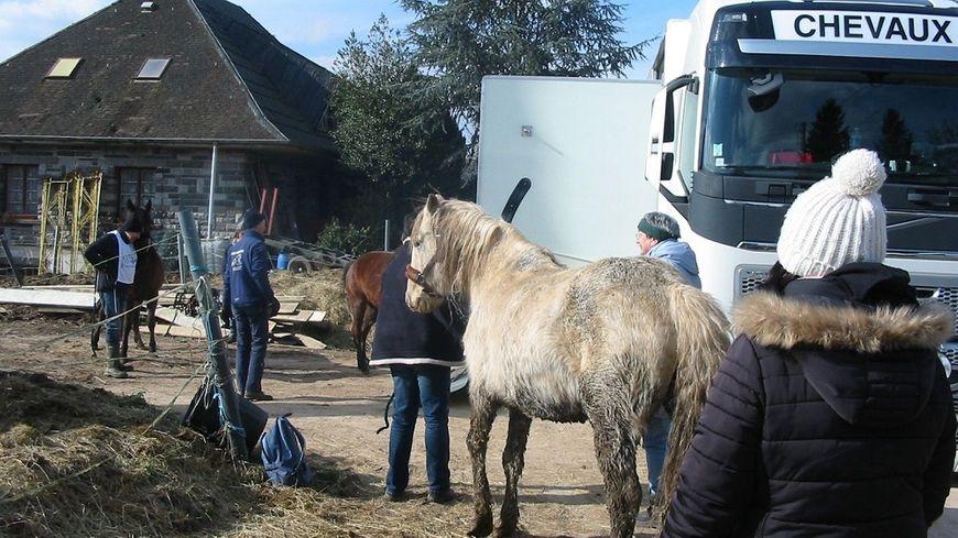 Les chevaux seront gardés, jusqu'à la fin de la procédure judiciaire, dans des pensions tenues secrètes